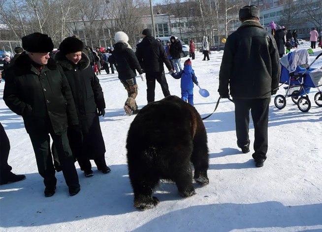 medvedi-na-ulice-goroda
